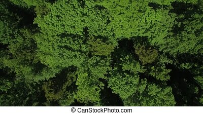 Aerial, Slow Vertical Flight Above German Forest