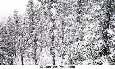 Aerial Snow Covered Trees Drone Footage Landscape Winter...