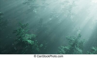 aerial sunrays in forest with fog