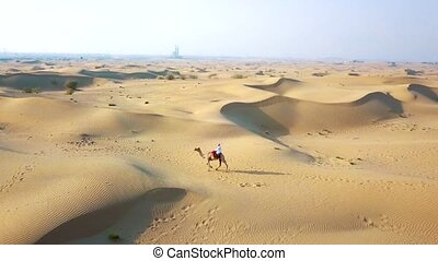 Aerial survey drone flies over the desert, the Bedouin with a camel goes through the desert