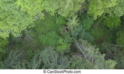 Aerial survey green forest. Wilderness