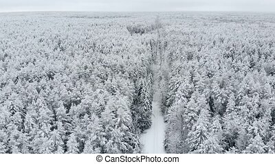 aerial survey of winter forest.