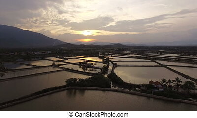 Aerial survey rice fields at sunset in Asia