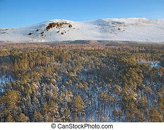 Aerial taiga 22 sky - Wild taiga in west Siberia. Aerial...