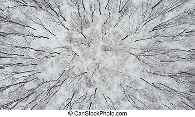 Aerial Top Down Drone Flight over Snow Covered Trees in Woodland at Winter. 4K Aerial Footage