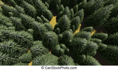 Aerial Top Down Flyover Shot of Forest. - Aerial Top Down...