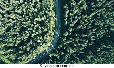 Aerial top down view of a fir tree European forest and a red car speeding on the road