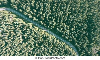 Aerial top down view of a fir tree forest and the European car road
