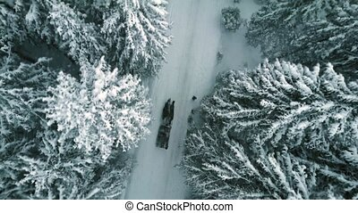 Aerial top down view of a horse driven sleigh in forest in falling snow
