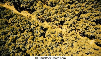 Aerial top down view of European forest trees on an autumn summer day