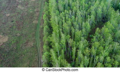 Aerial top down view of gravel road in forest with birch ...