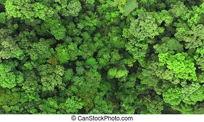 Aerial top-down view of rain-forest , Thailand.