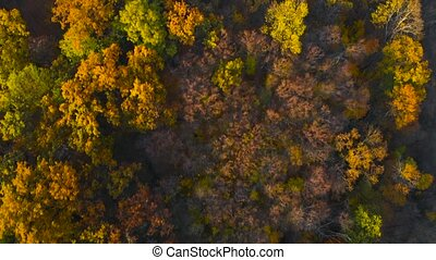 Aerial top view of autumn trees in forest.