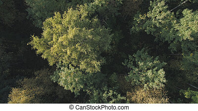 Aerial top view of autumn trees in forest in september