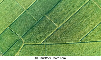 Aerial top view of beautiful fields in Chiang Rai area...