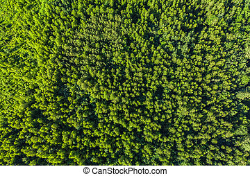 Aerial top view of summer green trees in forest.