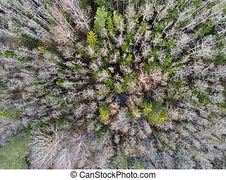 Aerial top view of trees from above in autumn forest. Drone shooting.