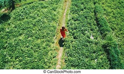 Aerial top view of woman in red dress walking along green fields in Bali