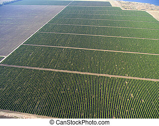 Aerial top view on extensive vineyards