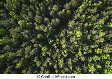 aerial top view view of mixed forest on a sunny summer day