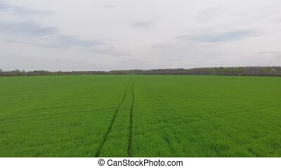 Aerial trail green field drone view push in forward camera movement
