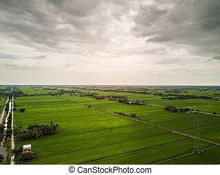 aerial udsigt, -, grønne, paddy, felter