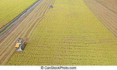 aerial udsigt, i, hægte, på, høst, felt