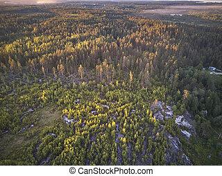 aerial udsigt, i, skov, ind, karelia