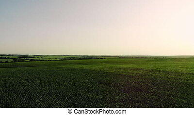 Aerial vast green field view - Agriculture field aerial...
