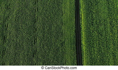Aerial vast green field view - Agriculture field aerial ...