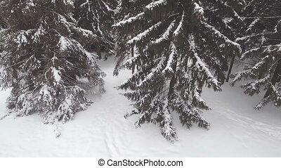 aerial:, verschneiter , wald