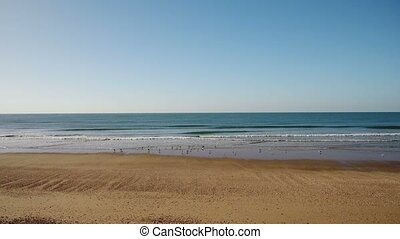Aerial. Video from air, seagulls fly on the beach sea. Portugal