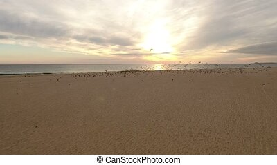 Aerial. Video from the air, seagulls fly on the beach sea....