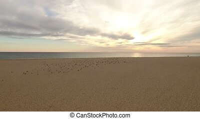 Aerial. Video from the air, seagulls fly on the beach sea. Portugal
