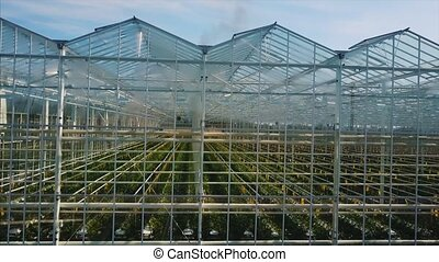 Aerial video of greenhouses. Roses are grown in a greenhouse...