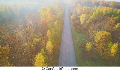 Aerial video of the road in the middle of a autumn forest.