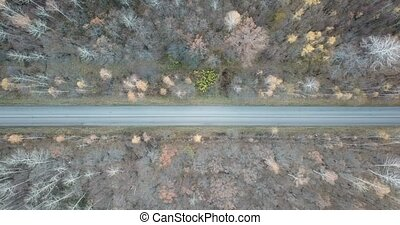 Aerial video of the road in the middle of autumn forest. ...
