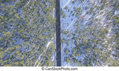 Aerial video view of forest in the winter. Landscape
