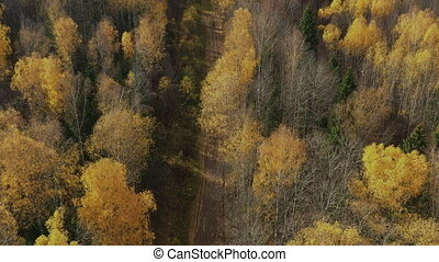 Aerial view above shot of colorful trees rustling in the breeze