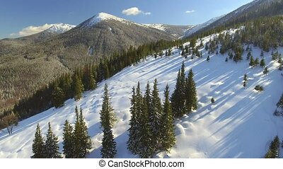 Aerial view. Beautiful snow landscape. Fly over trees covered with snow.