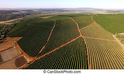 Aerial view coffee plantation in Minas Gerais state - Brazil