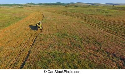 AERIAL VIEW. Combine Harvester Cutting Field - AERIAL VIEW....