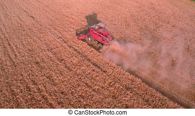 Combine Harvester Gathers the Wheat