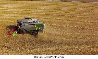 Aerial view Combine Harvester gathers the wheat at sunset. Harvesting grain field, crop season.
