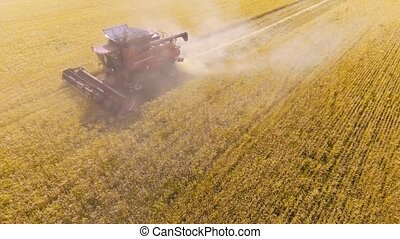 Aerial view Combine Harvester gathers the wheat