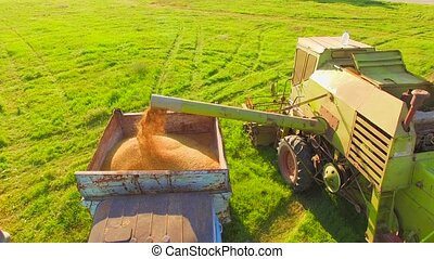 AERIAL VIEW. Combine Harvester Unloads Wheat Grain Into the Truck