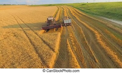 AERIAL VIEW. Combine on Harvest Field Loading Truck With Wheat. Wide Angle Shot.