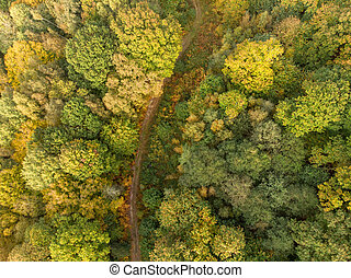 Aerial view country lane on forest autumn