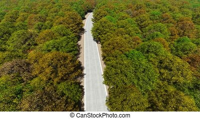 Aerial view country road in autumn forest.