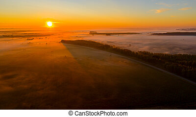 Aerial view early morning mist floating over ground vegetation and traffic among forest trees